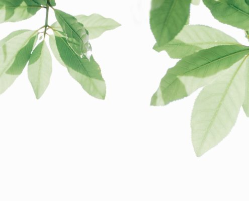 Blätter symbolisieren nachhaltiges Eventmanagement FETE Berlin 2019